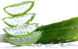 Aloe Inhaltsstoffe: Plante Aloe Vera Gel